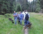 Harzwanderung mit Hund